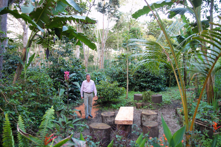 A shade-grown coffee farmer stands near a handmade table and wood stump stools in a forested area of the El Roble farm in Colombia featuring a variety of plants of varying heights