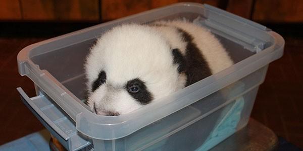 Bei Bei in a plastic bin