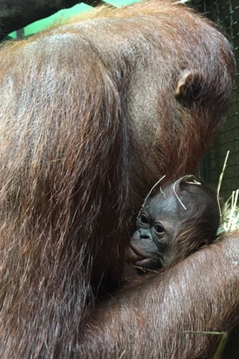 Batang and Redd (infant)