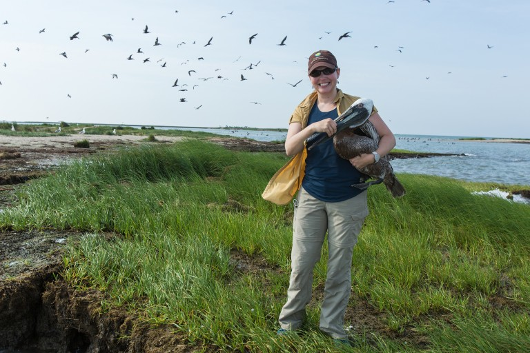 A scientist standing on a grassy island holding a brown pelican under her arm. Birds fly in the background.