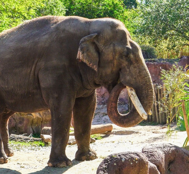 an elephant surrounded by bamboo and rocks