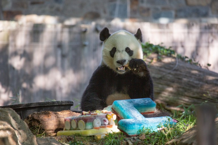 Bei Bei eating his frozen cake made of diluted juice and fruit.
