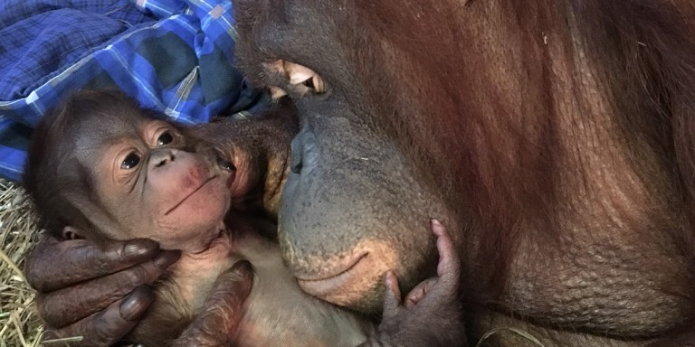 Batang cradles her newborn son, Redd, moments after his birth Sept. 12, 2016.