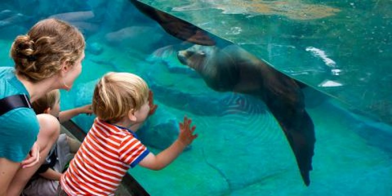 A mother and her child look at an underwater exhibit with a pinniped (sea lion or seal) swimming in the water