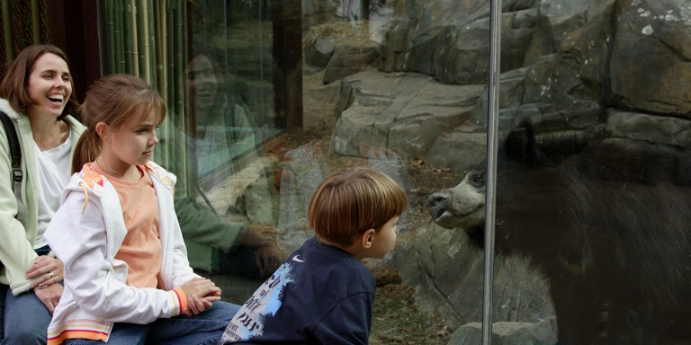 woman and two children looking at sloth bear through glass