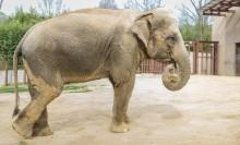 elephant in outside yard