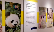 a wide view of multiple photo panels with animals and text