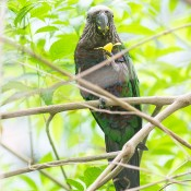 A small, multicolored parrot perched on a branch with a flower in one claw