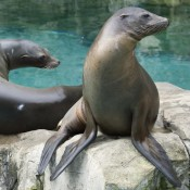 two seals sitting on a rock facing right, their attention captured by something out of sight.