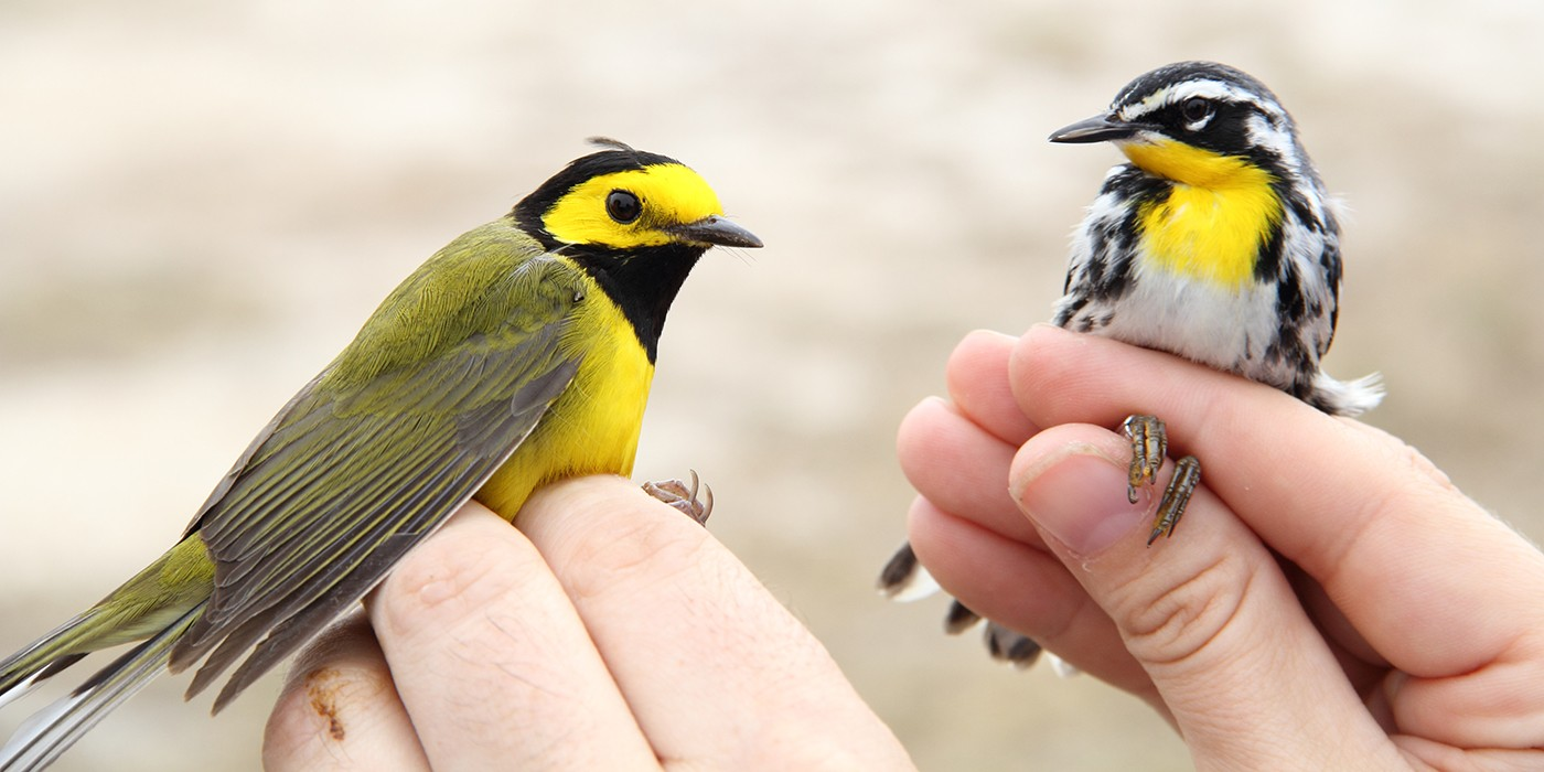 two small brightly-colored birds