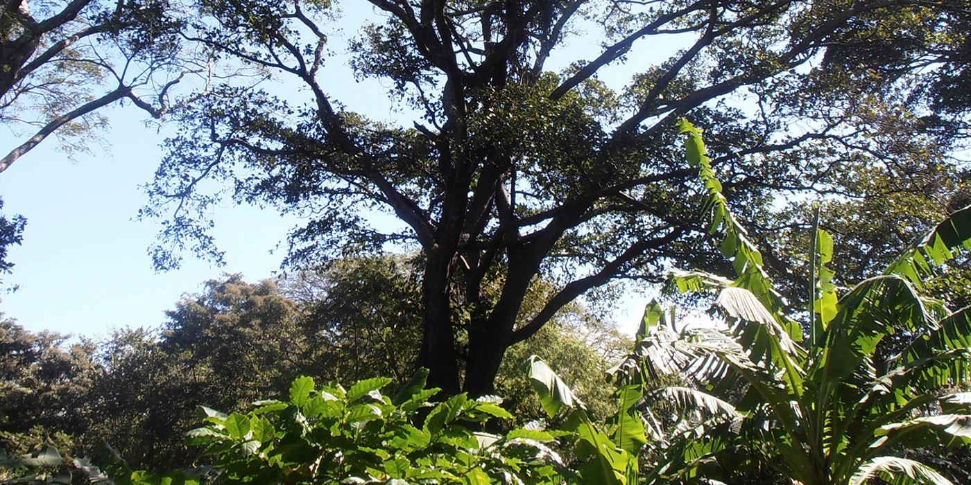 bucolic shade grown coffee farm