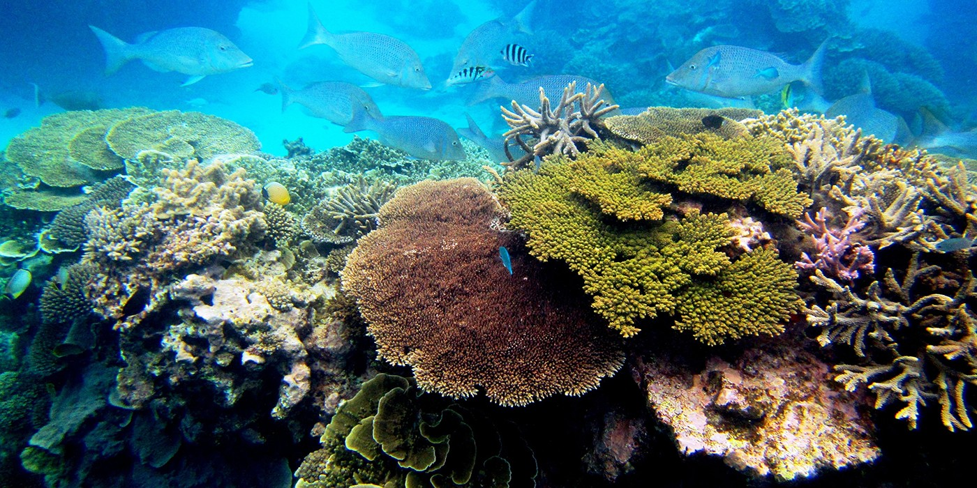 Coral reef with fish in the background