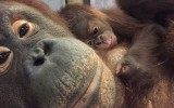 Batang reclining with baby Redd on her chest