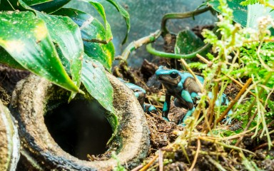 turqoise and black frog sitting in terrarium