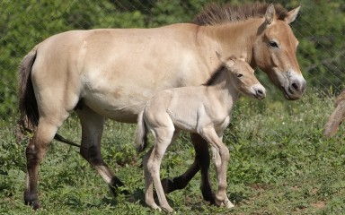 Mama horse and foal.