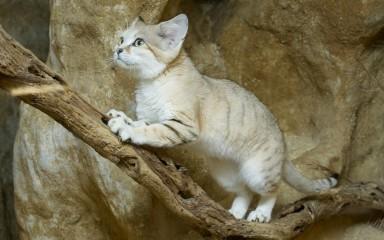 A cat walking up a branch