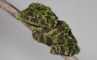 Tree frog resting