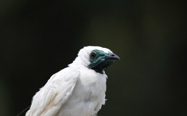 a white bird against a black background