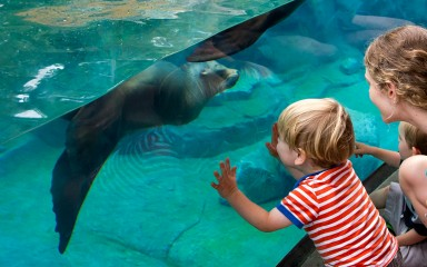 woman and child looking at a sea lion swimming