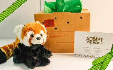 a red panda plush with a cardboard box and adopt certificate