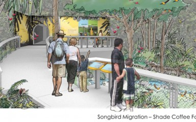 artist rendering of the songbird migration shade tree coffee farm exhibit
