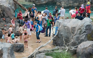 children stomp in the shallow tide pool while parents look on