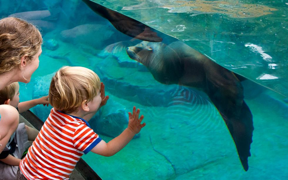 Woman and boy looking at a sea lion through the glass