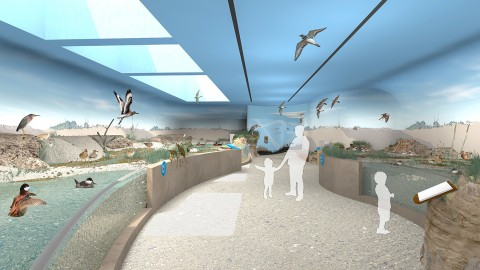Experience Migration exhibit rendering of the Shorebird Aviary: Delaware Bay, featuring a pathway surrounded by exhibitry