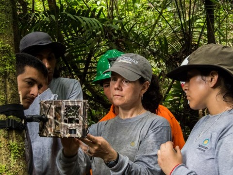 A group of researchers in the Peruvian Amazon set up a camera trap attached to a tree to capture images of animals that pass by