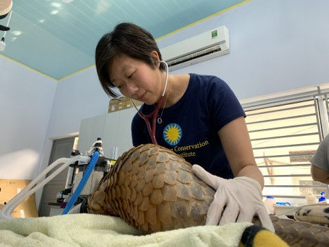 A wildlife veterinarian with the Smithsonian Conservation Biology Institute examines a pangolin