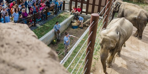 elephant's interact with keepers as visitors look on