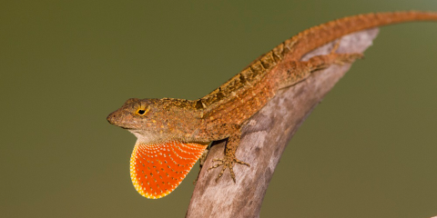 a lizard sits on a branch