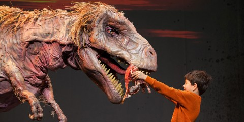 A child places something inside the mouth of a large, lifelike T-rex dinosaur puppet during an onstage production of Erth's Dinos Zoo Live