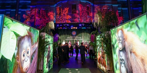 The entrance to the Smithsonian's National Zoo's 2017 gala in Washington, D.C., featuring large panel photos of orangutans and palm-leaf projected lights on the wall