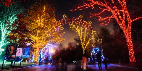 "The entrance to the Smithsonian's National Zoo's Zoolights event with trees lit up in red, green, yellow and blue and a lit sign that says ""Zoolights"""