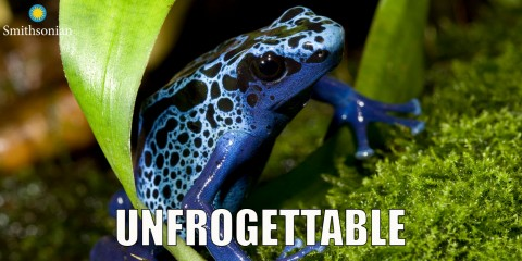 """A frog meme with the text """"Unfrogettable"""""""