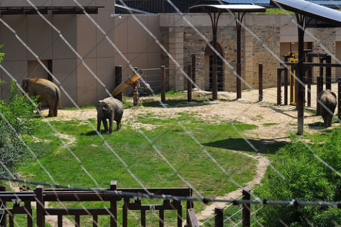 Public Debut of Asian Elephants Maharani