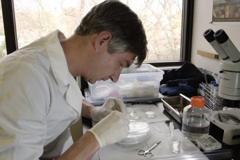 SCBI Reproductive Physiologist Pierre Comizzoli