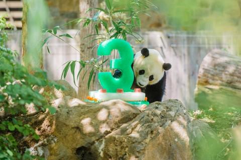 Bao Bao Third Birthday