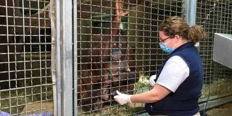 Keeper Erin Stromberg works with Redd and Batang