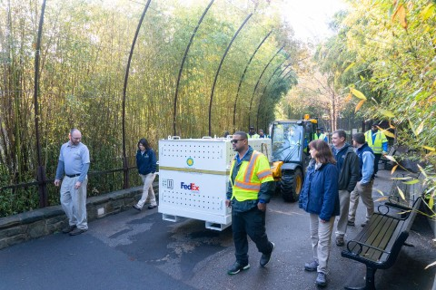Smithsonian staff and keepers escort giant panda Bei Bei's crate as he is brought out of his enclosure at the Smithsonian's National Zoo.