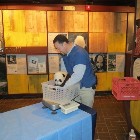 Giant Panda Cub Bei Bei Will Make His Public Debut Jan. 16