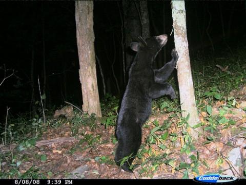 bear leaning against tree