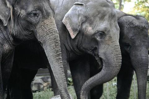 A group of elephants