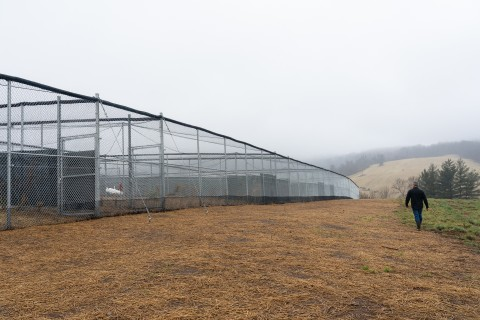 A researcher at the Smithsonian Conservation Biology Institute in Front Royal, Virginia, walks by the new whooping crane facility