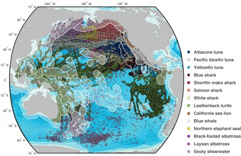 Map of routes of species that migrate through the high-seas of the Pacific Ocean.