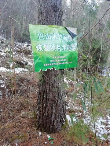 A sign marking a bamboo restoration plot in Guanyinshan Nature Reserve
