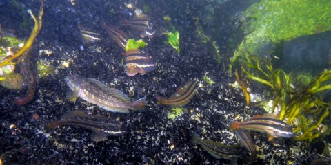 Fish living within the artificial reef