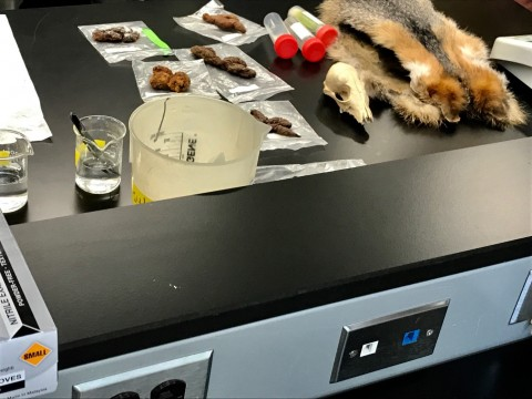 A lab table with some beakers of liquid and samples of hair, bones and fecal matter from various animals