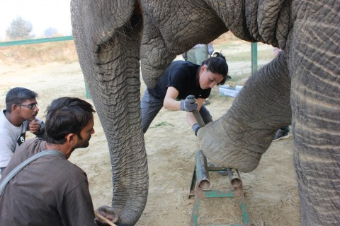Wildlife SOS Pedicure